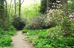 Garden_in_the_Woods_-_IMG_2462